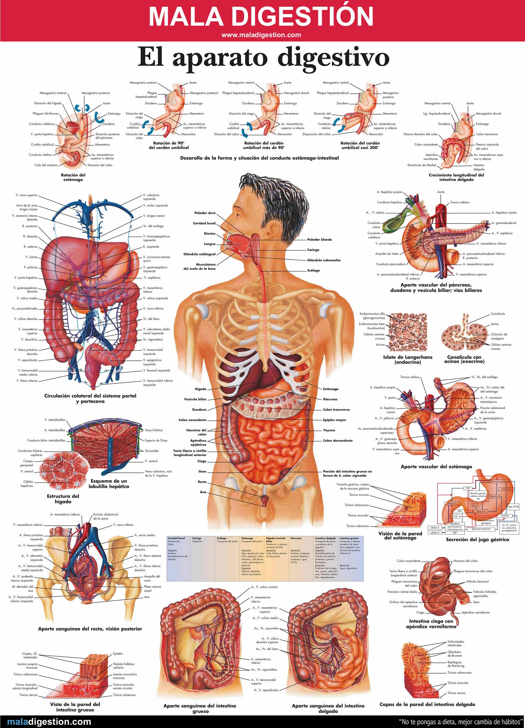 Corte de digestion sintomas y tratamiento